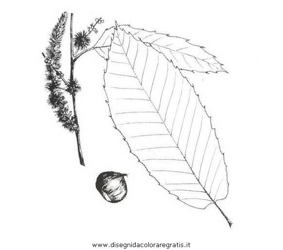 natura/alberi_speciali/castagno_2.JPG