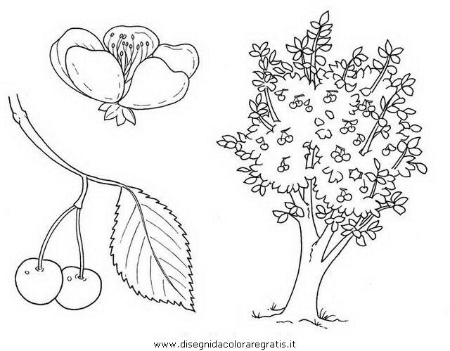 natura/alberi_speciali/ciliegio.JPG