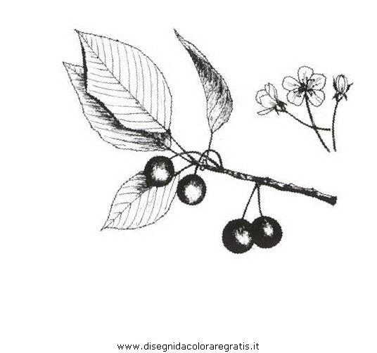 natura/alberi_speciali/ciliegioselvatico.JPG