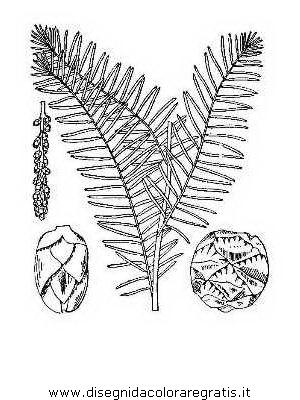 natura/alberi_speciali/cipresso_3.JPG