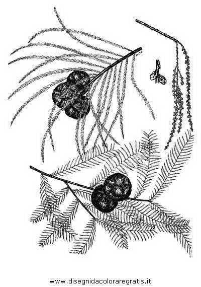 natura/alberi_speciali/cipresso_5.JPG