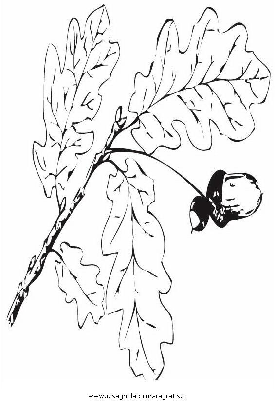 natura/alberi_speciali/farnia2.JPG