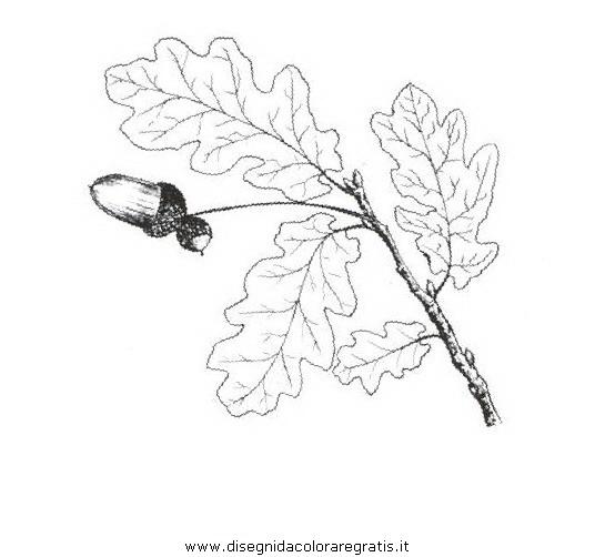 natura/alberi_speciali/farnia_2.JPG