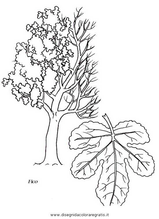 Disegno fico categoria natura da colorare for Foto di alberi da colorare