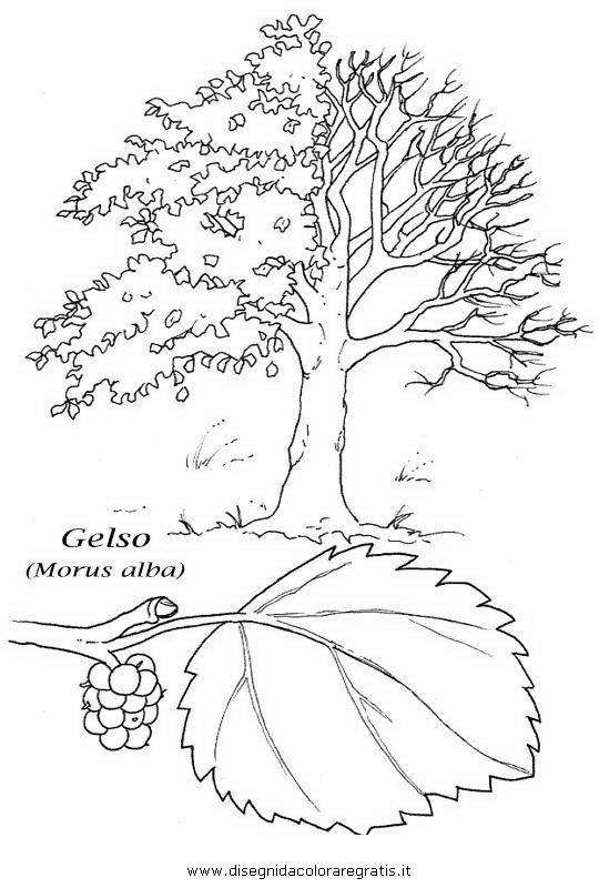 Disegno gelso categoria natura da colorare for Foto di alberi da colorare