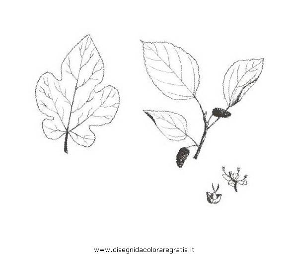 natura/alberi_speciali/gelsobianco.JPG