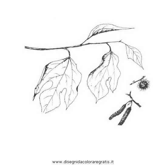 natura/alberi_speciali/gelsodacarta.JPG