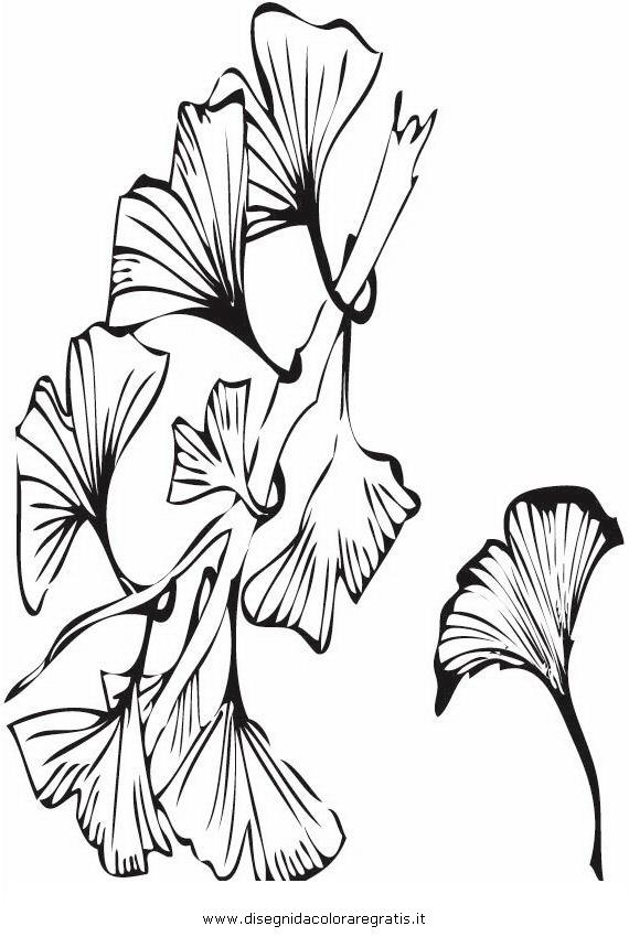 natura/alberi_speciali/ginko_biloba.JPG