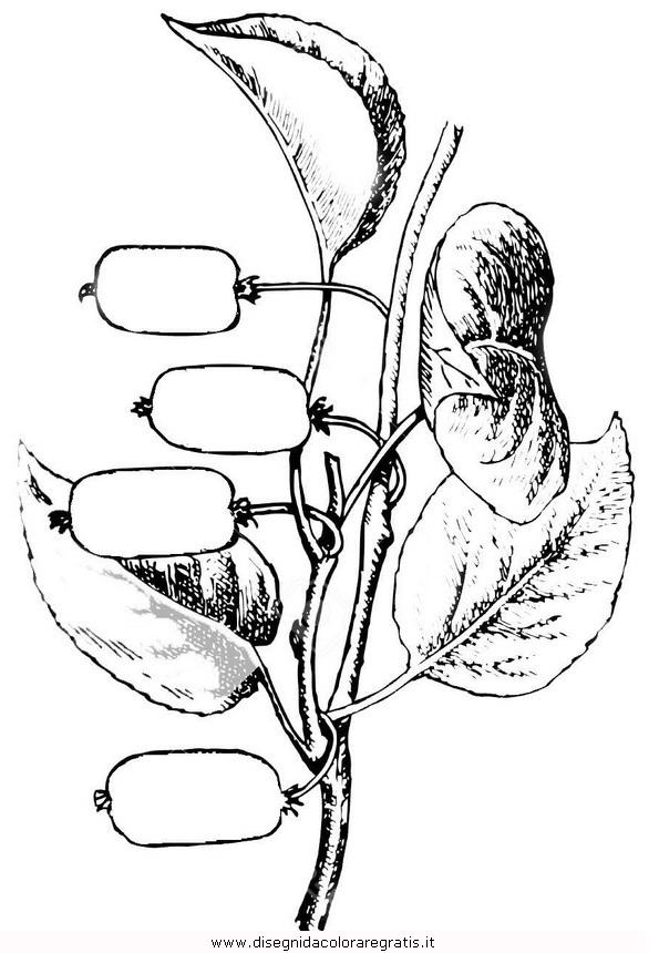 natura/alberi_speciali/kiwi.JPG