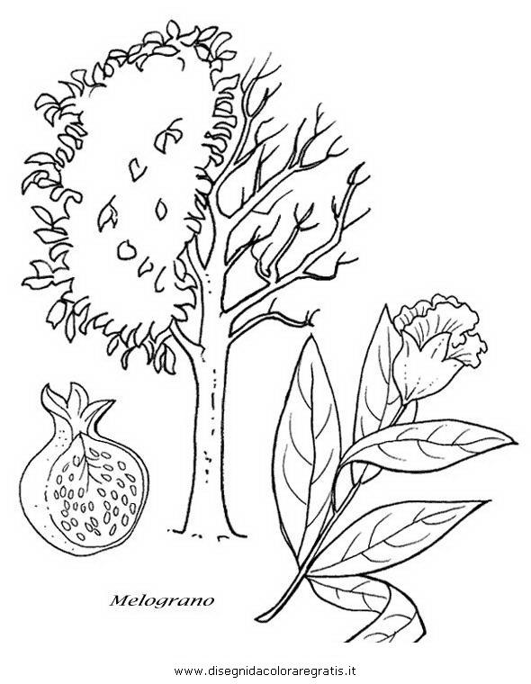 natura/alberi_speciali/melograno.JPG