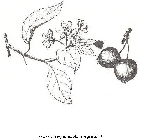 natura/alberi_speciali/meloselvatico.JPG