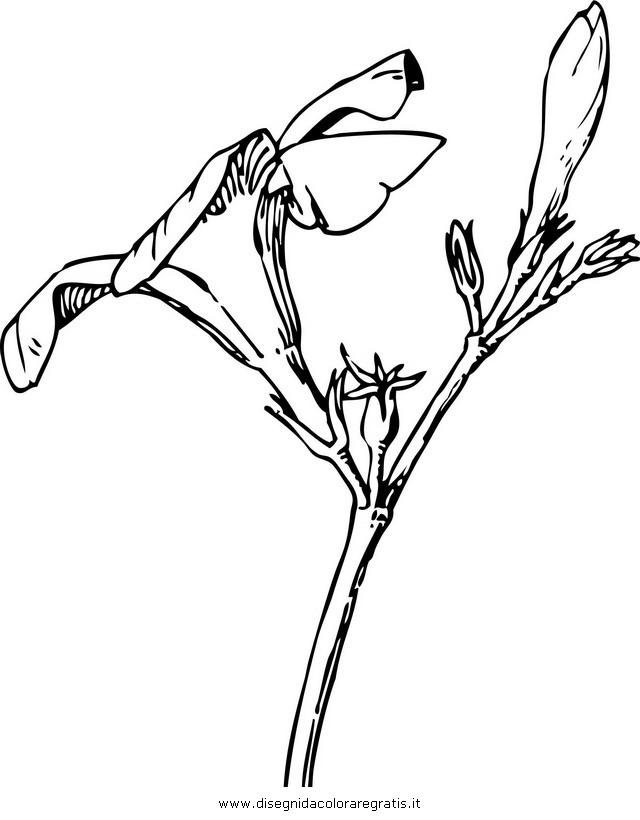 natura/alberi_speciali/oleandro_1.JPG