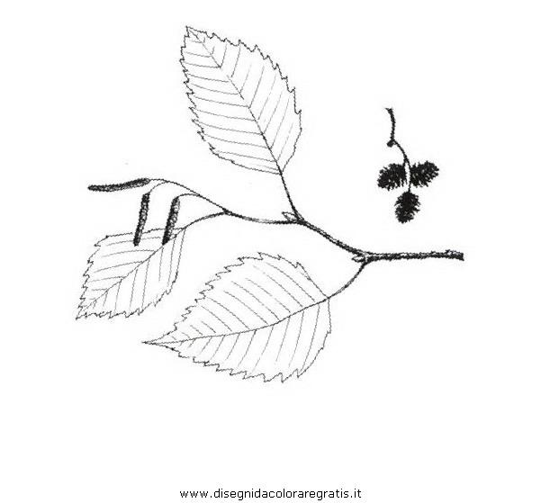 natura/alberi_speciali/ontanobianco.JPG