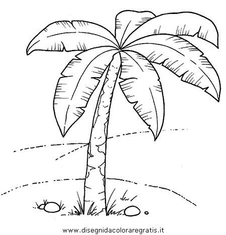 natura/alberi_speciali/palma.JPG