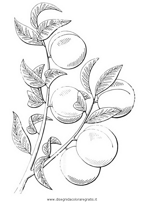 natura/alberi_speciali/pesco_01.JPG
