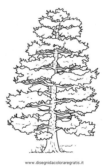 Disegno pino categoria natura da colorare for Foto di alberi da colorare