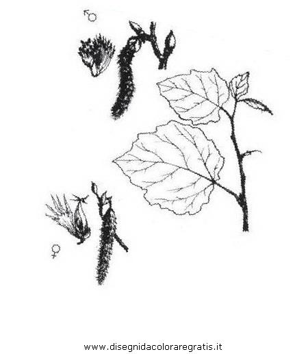 natura/alberi_speciali/pioppogatterino.JPG