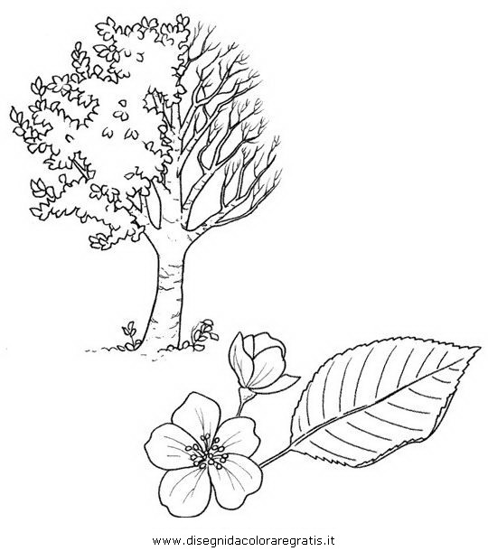 natura/alberi_speciali/prunus.JPG