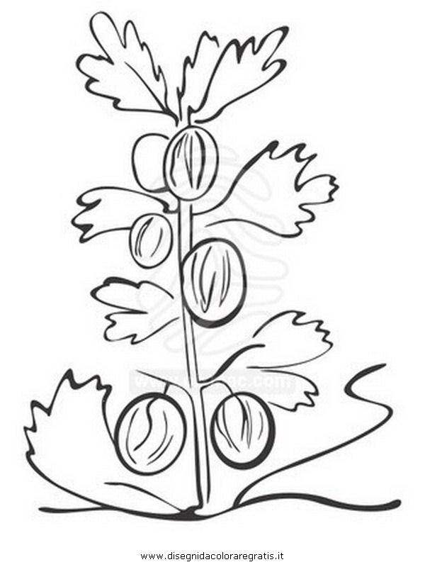 natura/alberi_speciali/ribes.JPG