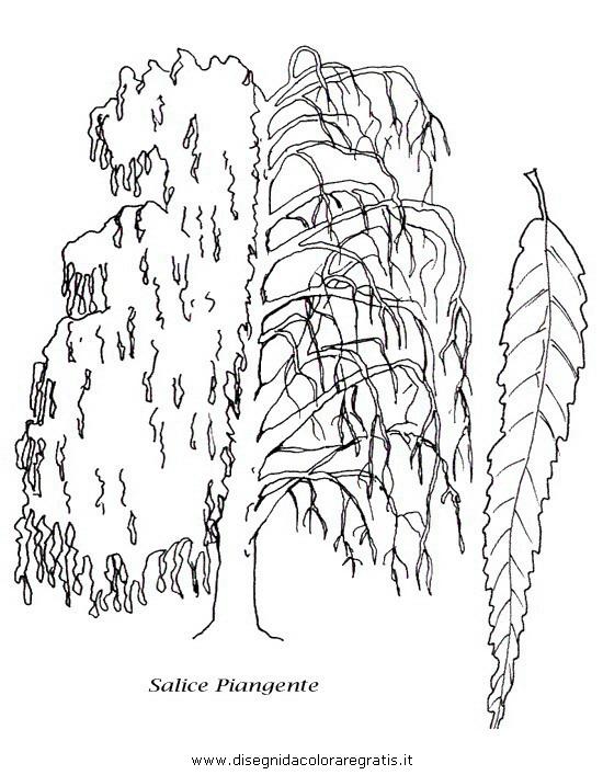 Disegno salice categoria natura da colorare for Foto di alberi da colorare