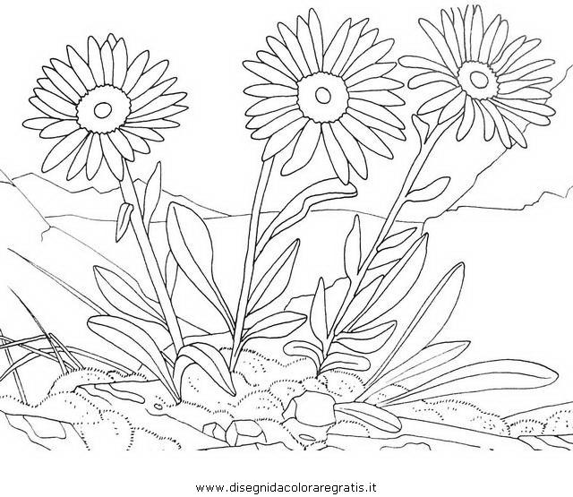 natura/arbusti/arnica_3.JPG