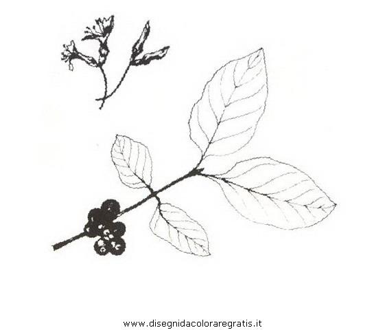 natura/arbusti/caprifogliopeloso.JPG