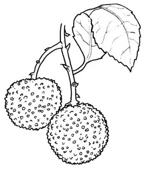 natura/arbusti/corbezzolo_1.jpg