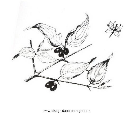 natura/arbusti/corniolo.JPG
