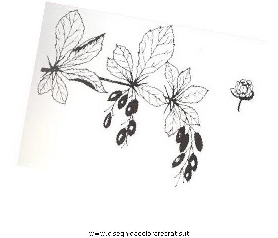 natura/arbusti/crespino.JPG