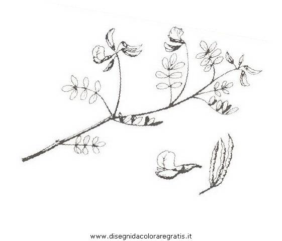 natura/arbusti/emero.JPG