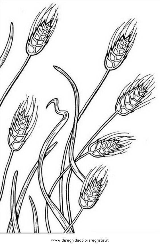 natura/arbusti/frumento.JPG