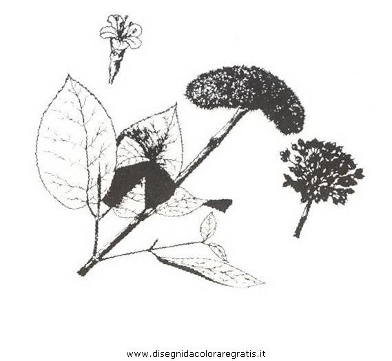 natura/arbusti/lantana.JPG