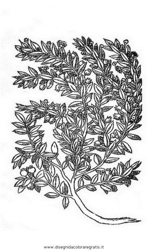 natura/arbusti/mirto_05.JPG