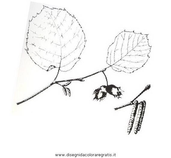 natura/arbusti/nocciolo.JPG