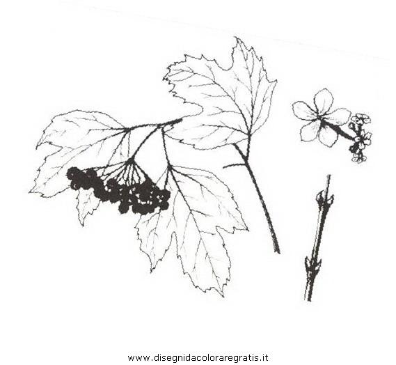 natura/arbusti/palladineve.JPG