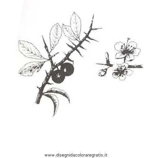 natura/arbusti/prugnolo.JPG