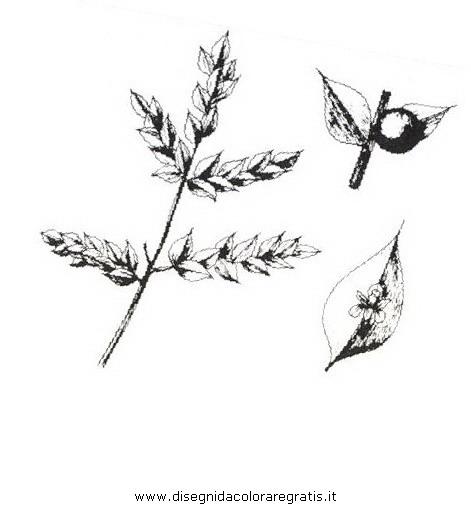 natura/arbusti/pungitopo.JPG
