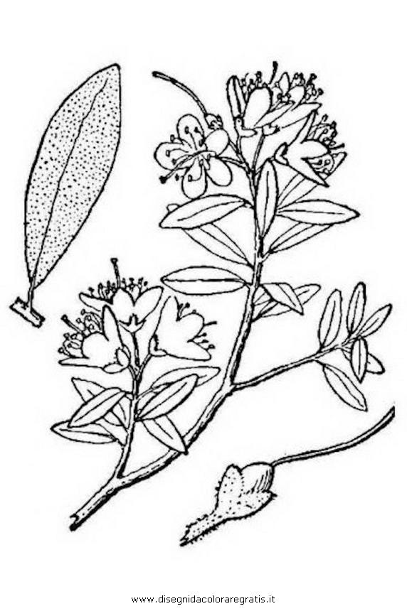 natura/arbusti/rododendro_lapponico.JPG