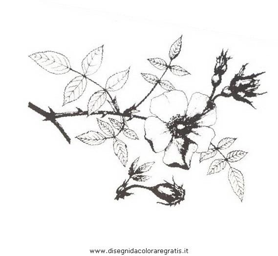 natura/arbusti/rosaselvatica.JPG