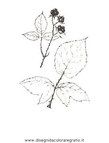 natura/arbusti/rovobluastro.JPG