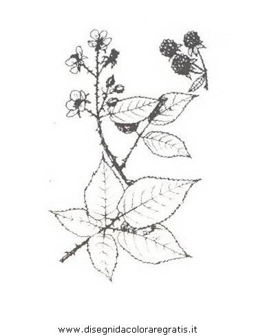natura/arbusti/rovocomune.JPG