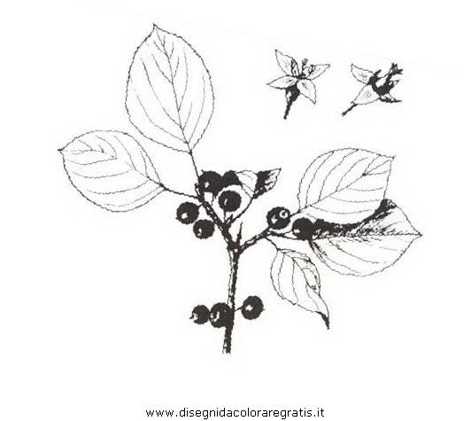 natura/arbusti/spinocervino.JPG