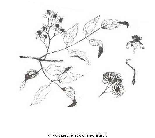 natura/arbusti/vitalba.JPG