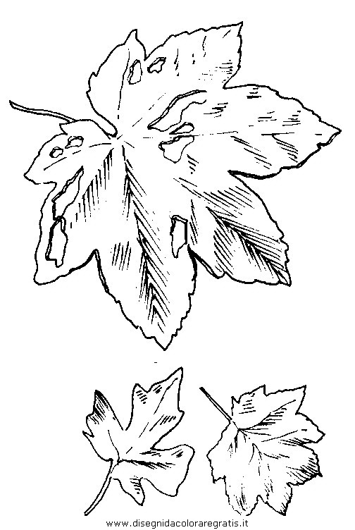 natura/autunno/natura_autunno_foglie_27.JPG