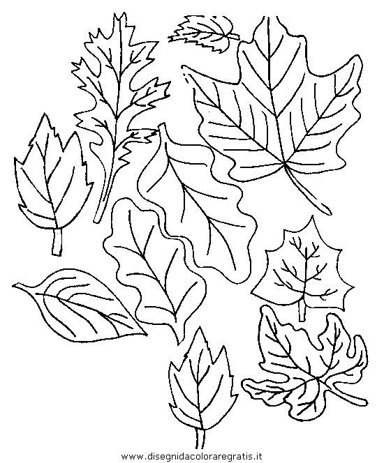 natura/autunno/natura_autunno_foglie_28.JPG