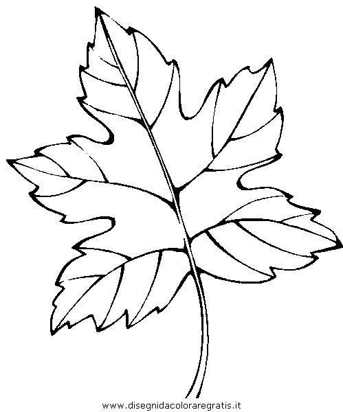 natura/autunno/natura_autunno_foglie_30.JPG