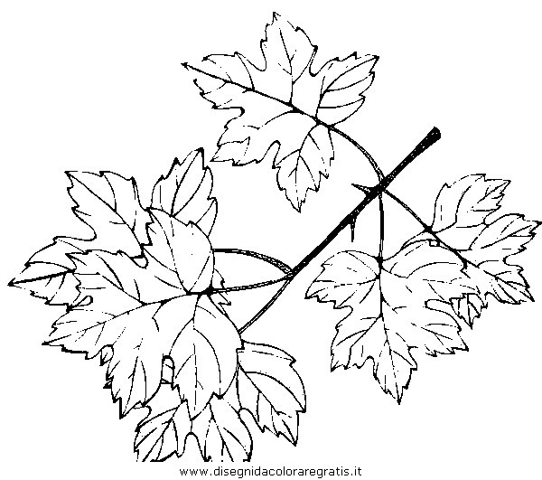 natura/autunno/natura_autunno_foglie_31.JPG