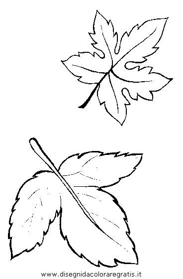 Disegno natura autunno foglie 33 categoria natura da colorare - Immagini da colorare della natura ...