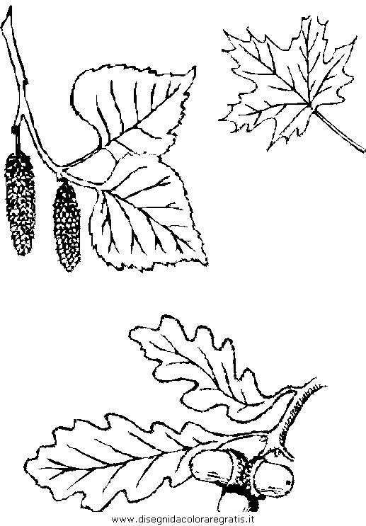 natura/autunno/natura_autunno_foglie_34.JPG