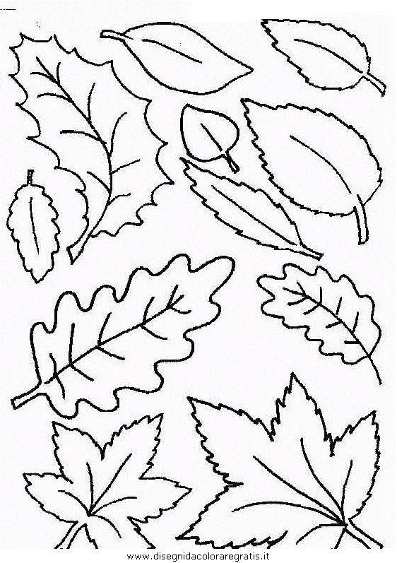 Disegno natura autunno foglie 35 categoria natura da colorare - Immagini da colorare della natura ...